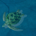 Swimming turtle feature for bottom of the pool, Pools in Central Florida